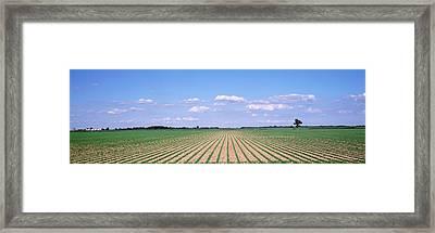 Soybean Field In A Landscape, Marion Framed Print