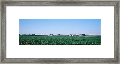 Soybean Field Ogle Co Il Usa Framed Print