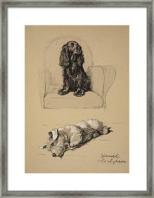 Spaniel And Sealyham, 1930 Framed Print by Cecil Charles Windsor Aldin