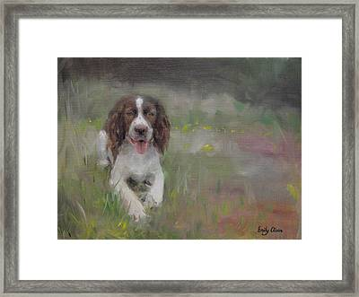 Spaniel At Rest Framed Print