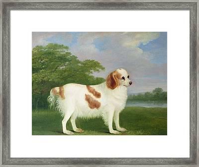 Spaniel In A Landscape Framed Print