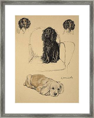 Spaniels, 1930, Illustrations Framed Print by Cecil Charles Windsor Aldin