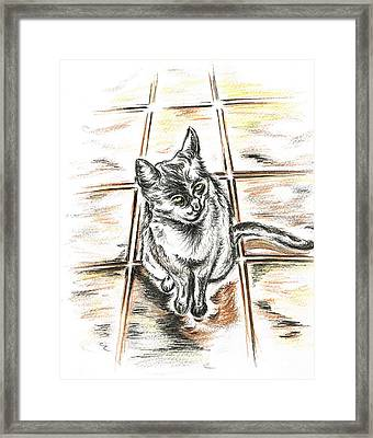 Spanish Cat Waiting Framed Print