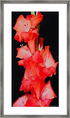 Spanish Dancer Framed Print by Heidi Smith