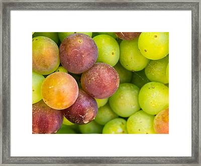 Spanish Grapes Macro Framed Print by Kaleidoscopik Photography