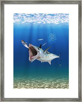 Spanish Mackerel Framed Print