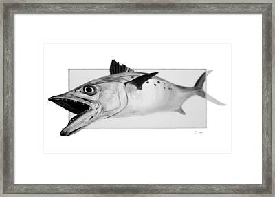 Spanish Mackerel - Pencil Framed Print