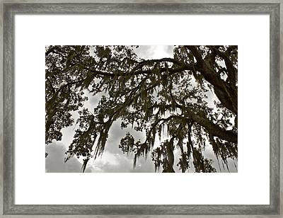 Framed Print featuring the photograph Spanish Moss by Alice Mainville