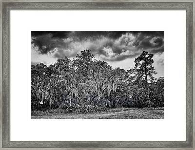 Spanish Moss And Clouds Study Framed Print