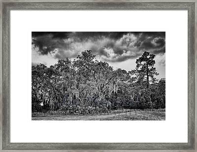 Spanish Moss And Clouds Study Framed Print by Silvio Ligutti