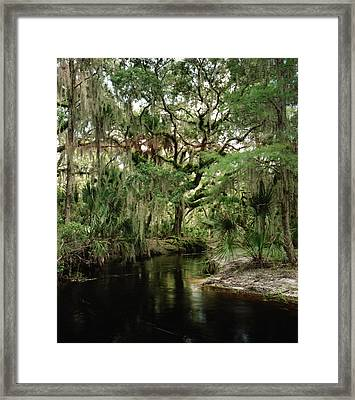 Spanish Moss And Oak. Three Lakes W.m.a. Framed Print by Chris  Kusik