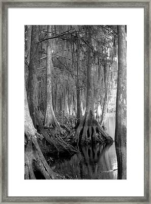 Spanish Moss And Pond Cypress. Shingle Creek. Framed Print