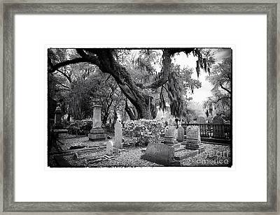 Spanish Moss In The Cemetery Framed Print