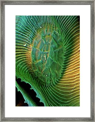 Spanish Moss Leaf Framed Print