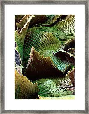 Spanish Moss Leaves Framed Print