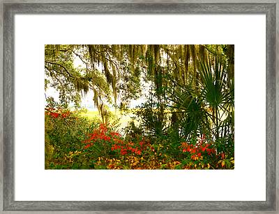 Spanish Moss Of Beaufort 1 Framed Print