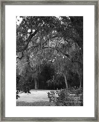Framed Print featuring the photograph Spanish Moss Of St.augustine by Brigitte Emme