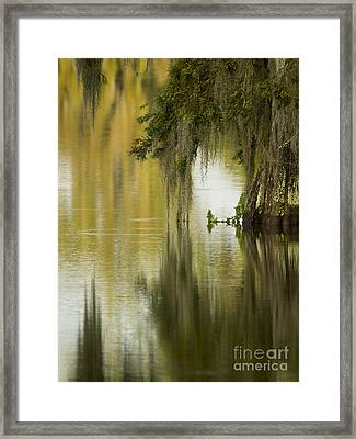 Spanish Moss Reflections Framed Print by Kelly Morvant