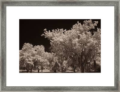 Spanish Moss Framed Print
