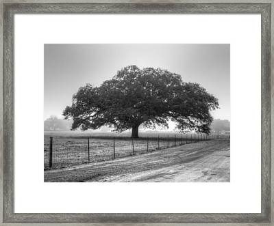 Spanish Oak Black And White Framed Print