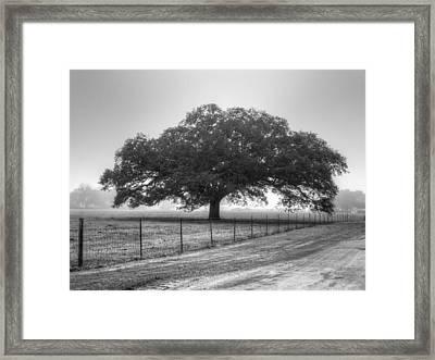 Spanish Oak Black And White Framed Print by Lanita Williams
