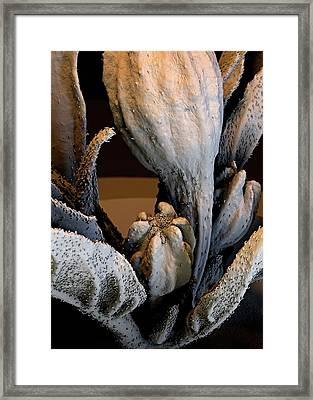 Spanish Pepper Flower Framed Print by Stefan Diller
