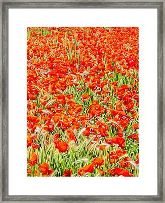 Spanish Poppies 2 Framed Print