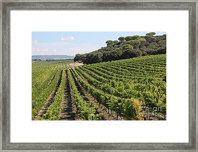 Spanish Vineyard Framed Print