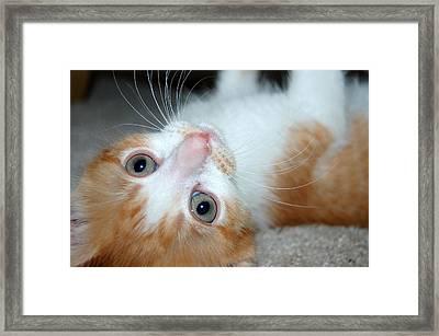 Spankie Framed Print