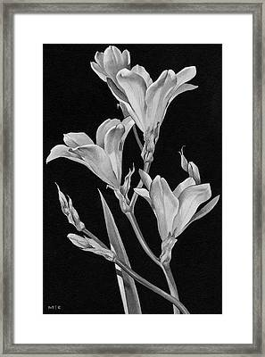 Sparaxis Flowers Framed Print