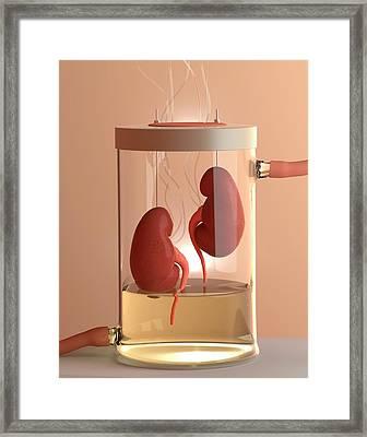 Spare Kidneys Framed Print by Tim Vernon