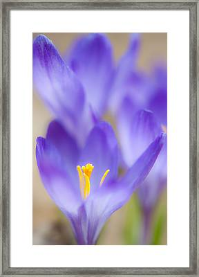 Spark Of Spring Framed Print