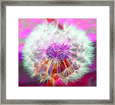 Sparkle Framed Print by Barbara McDevitt