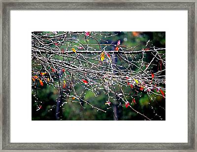 Sparkle Framed Print by Beverly Hammond