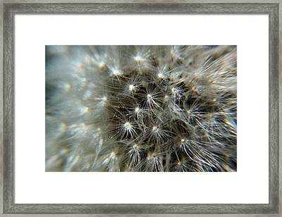 Framed Print featuring the photograph Sparkler - Closeup by Ramabhadran Thirupattur
