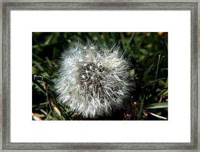 Framed Print featuring the photograph Sparkler - Dandelion Flower by Ramabhadran Thirupattur