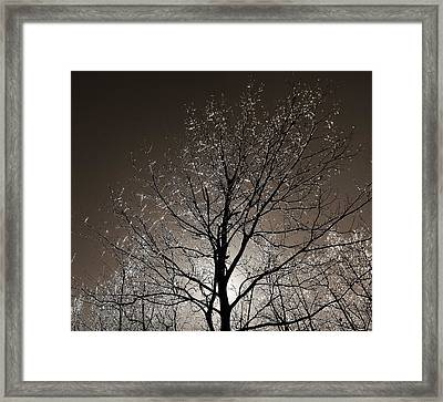 Framed Print featuring the photograph Sparkling Branches by Kathi Mirto