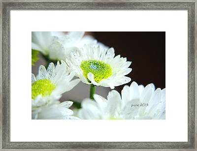 Sparkling Daisies Framed Print
