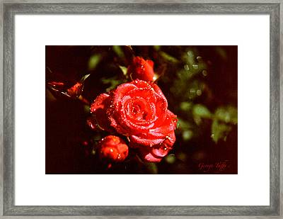 Sparkling Framed Print by George Tuffy