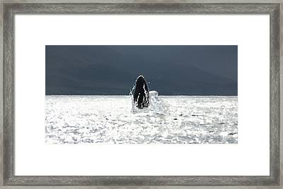 Sparkling Framed Print by Marcello Cicchini
