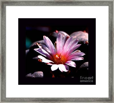 Sparkling Peyote Flower Framed Print