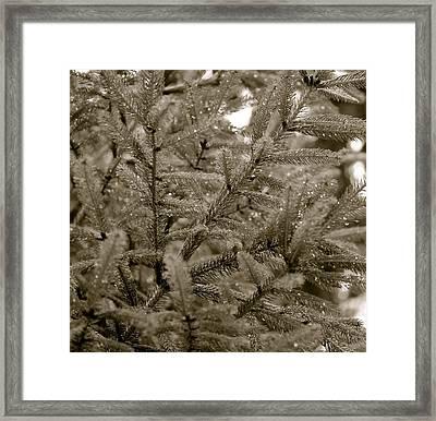 Sparkling Pine Framed Print by Corinne Rhode