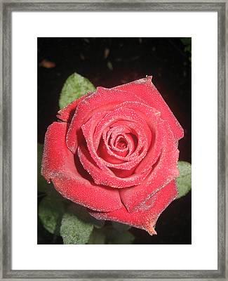 Sparkling Red Rose Framed Print by Celeste Tyree
