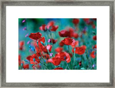 Sparkling Red Framed Print