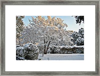 Sparkling Tree Framed Print