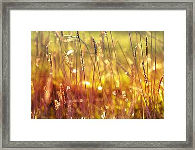 Sparkling Wet Grass In The Sunlight Framed Print by Anne Macdonald