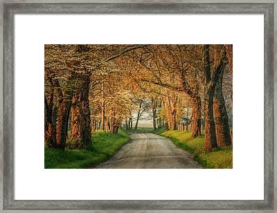 Sparks Lane Framed Print by Jay Stockhaus