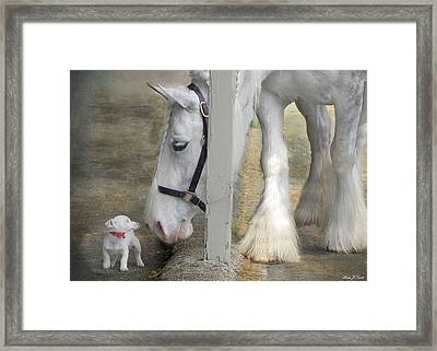 Sparky And Sterling Silvia Framed Print by Fran J Scott