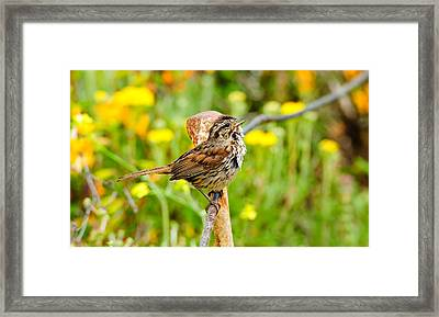 Sparrow Framed Print by Donald Fink