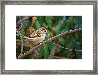 Sparrow In Winter Framed Print by Nikolyn McDonald